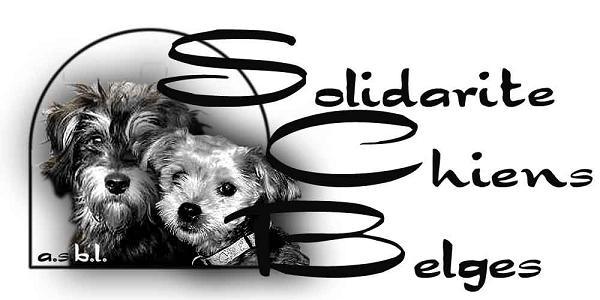 Solidarité chiens belges