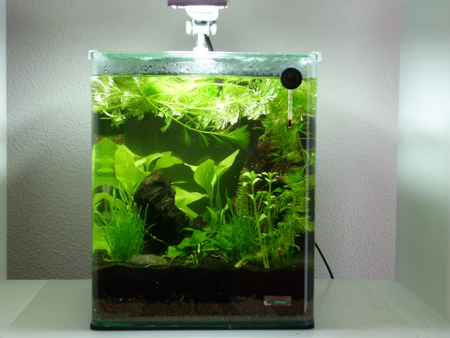 Photo de vos aquarium et poisson page 7 aquariums et for Aquarium 30l combien de poisson rouge