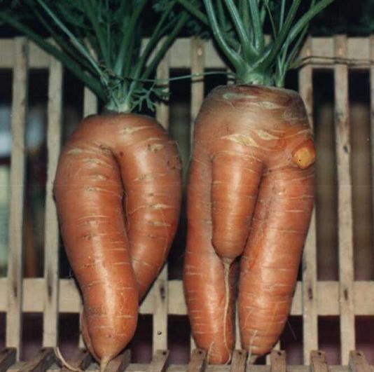 Après le carbone, après le boron : la carotte !