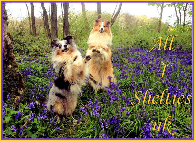 all4sheltiesuk