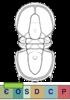 Super-famille Agnostoidea