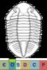Super-famille Asaphoidea