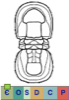Super-famille Condylopygoidea