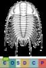 Sous-ordre Corynexochina
