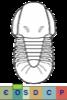 Super-famille Cyclopygoidea