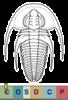 Super-famille Fallotaspidoidea