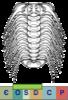 Super-famille Odontopleuroidea
