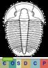 Super-famille Ptychoparioidea