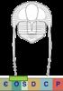 Super-famille Trinucleioidea