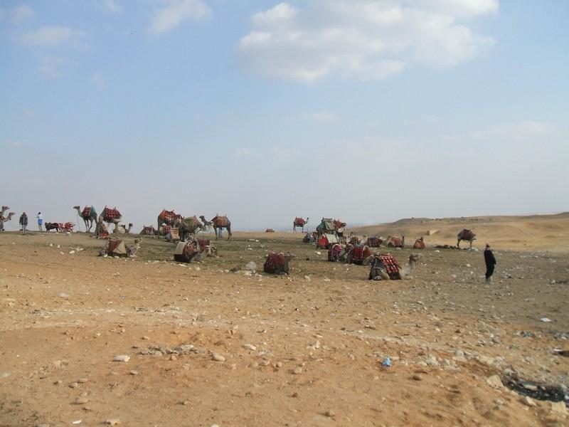 Photos du Caire Chamea10
