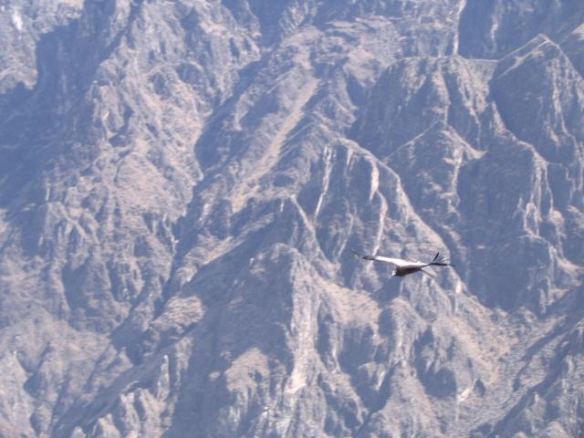 Vol de pente dans les alpes-maritimes