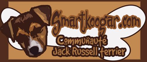 Communauté Jack Russell Terrier