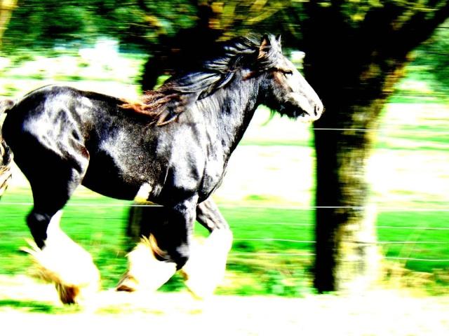 MACLOU new photos Mac_0018