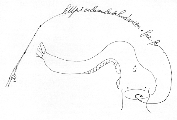 logo Silure club Rhodanien Silure11