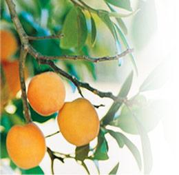 فوائد الخضروات و الفواكه التجميلية 217-ab10