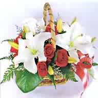 أعشاب و نباتات ذات غايات تجميلية Bc00210