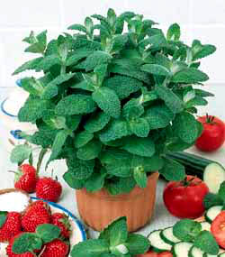 فوائد الخضروات و الفواكه التجميلية Menthe10