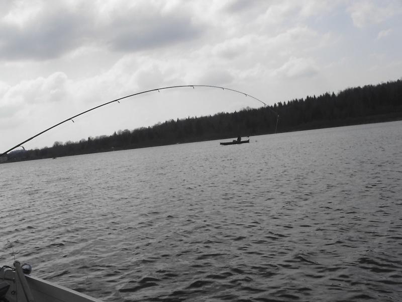 les  poissons de petit Thom le fiston Pic09610