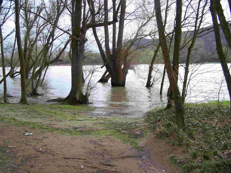 Le Rhône en crue! 100_1117