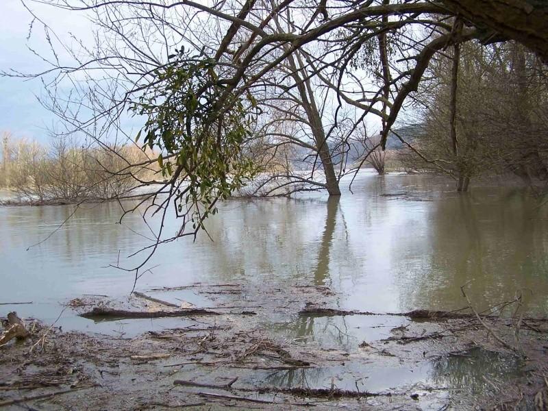Le Rhône en crue! 100_1211