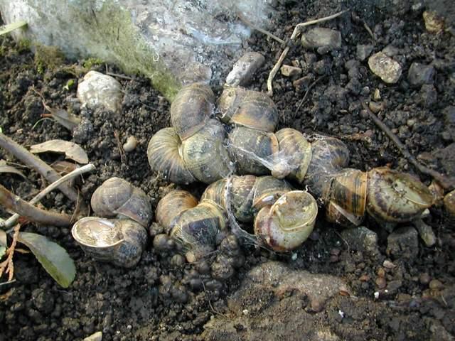 une tresse d'escargots !!! Dscn5314