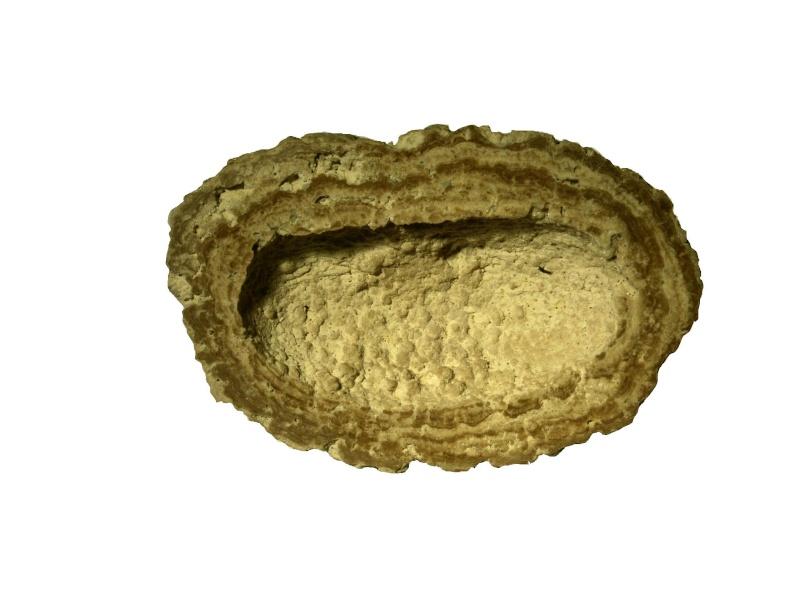 Radiographie des fossiles Nodule10