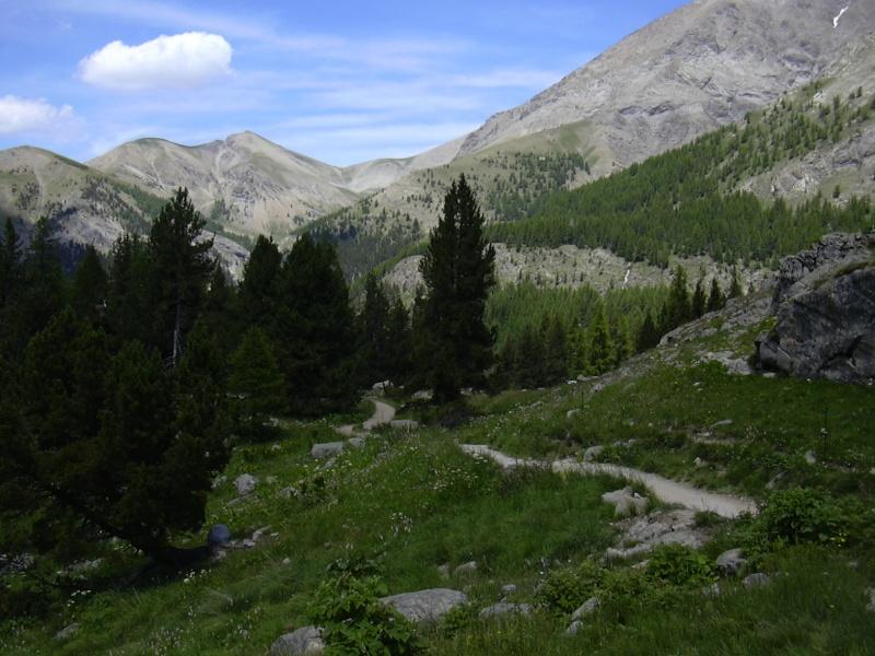 Sur la route du lac d'allos Allos_19