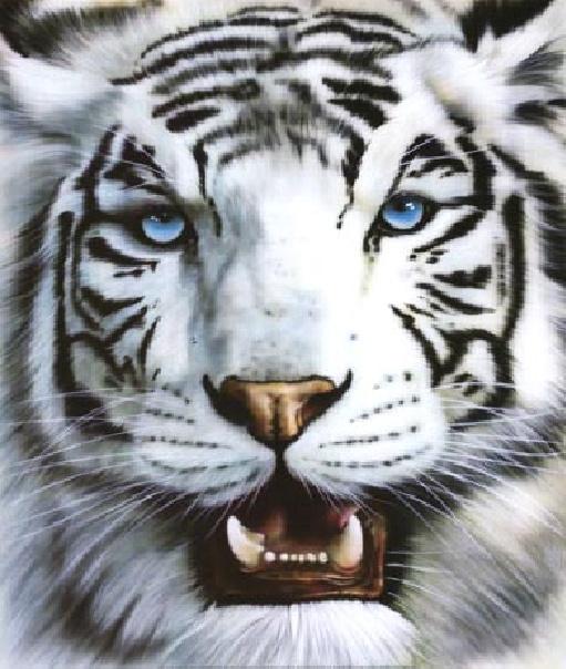 VTXD-tiger
