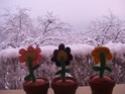 c'est l'hiver!!! Dscf6610