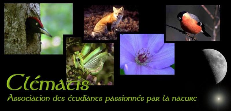 Association Clématis