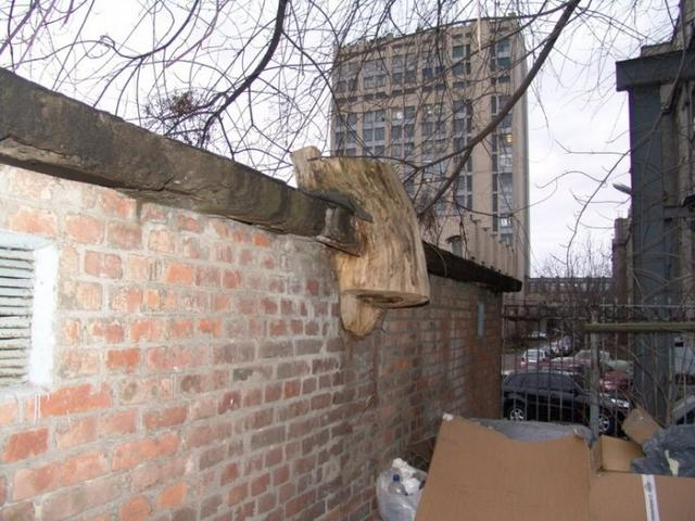 tree_vs_wall_001.jpg