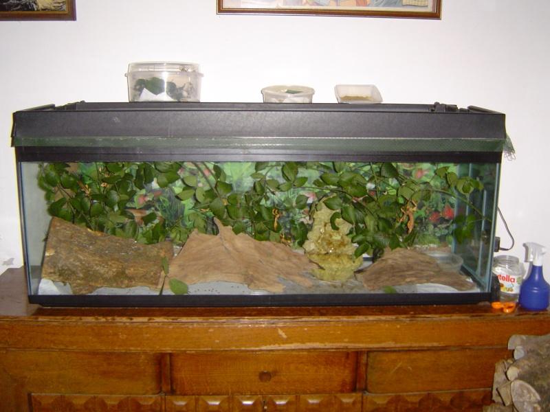 aquarium transforme en terrarium 15 la gerbille qu 233 b 233 coise forumactif atlub