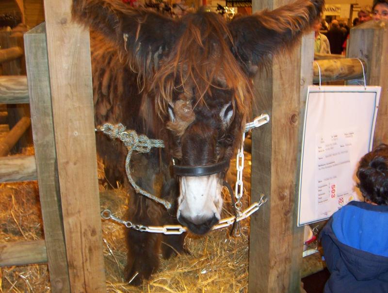 Porte de versaille salon de l 39 agriculture page 1 for Salon snacking porte de versaille