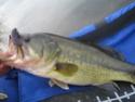 vos plus belles photos de poissons 2006 Img_2410