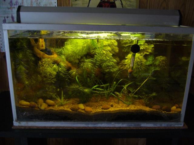 Mon aquarium for Bac a poisson 500l