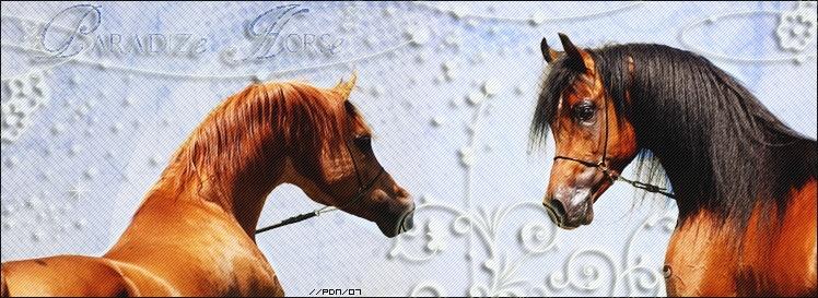 • Paradize Horse •