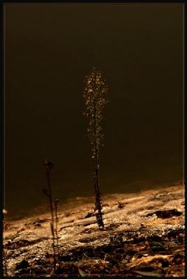Bijoux du soir dans Mes mots sur les photos de Silence epv00911