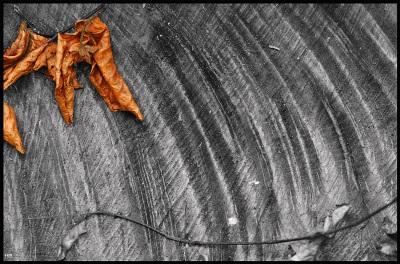 Automne dans L'écrit de l'ombre sansti11