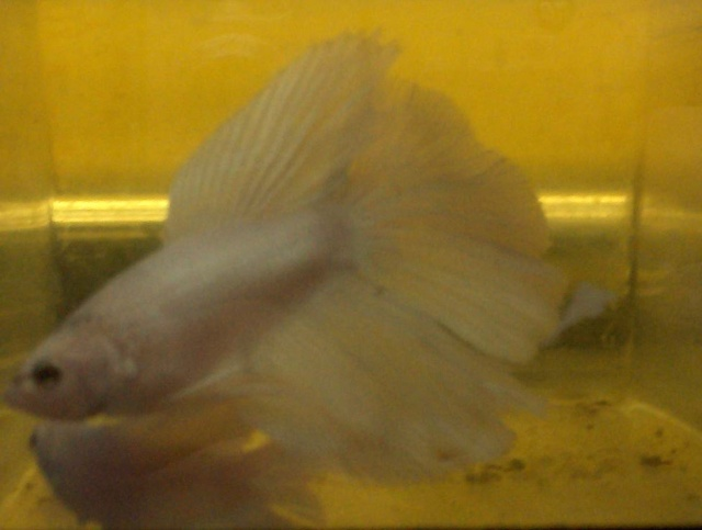 Achat de poissons en thailande Photo_10