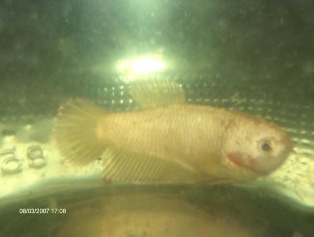 Achat de poissons en thailande Photos11