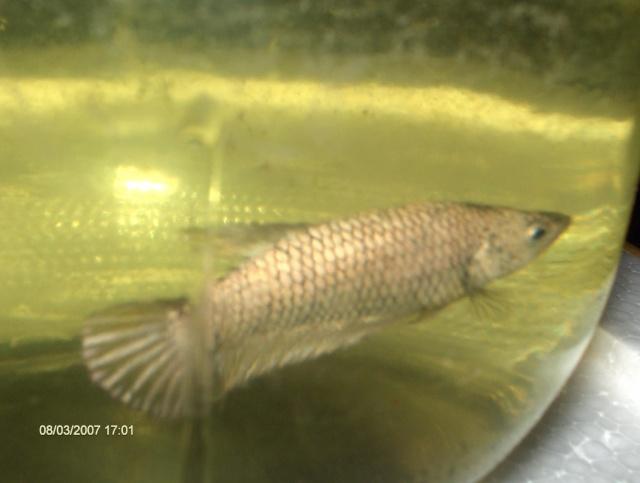 Achat de poissons en thailande Photos13