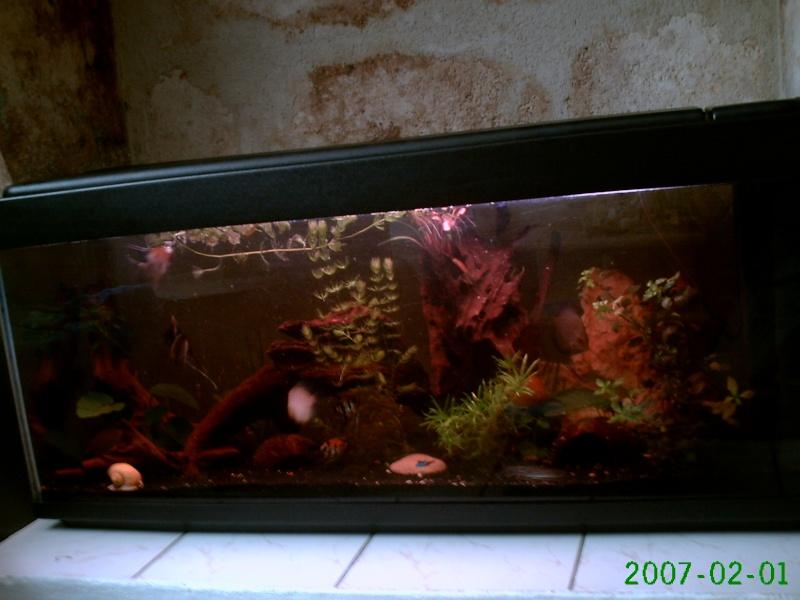vend tout aquarium et matériel aquariophile Pict0615