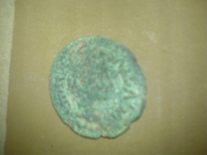 Semis de Cartagonova (por Augusto) Dsc00110