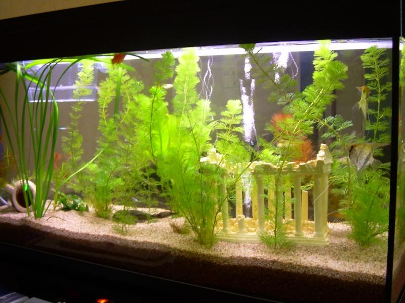 aquarium eau douce 130 litres