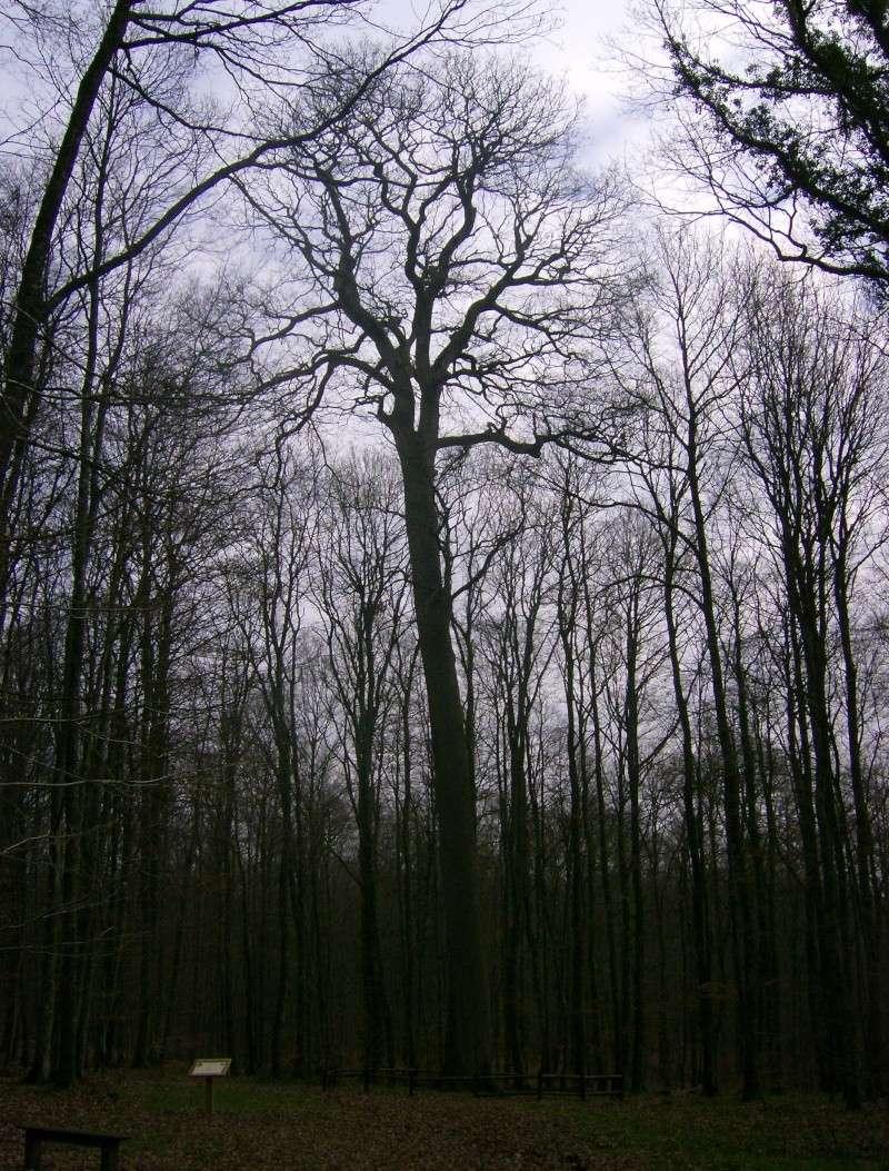 2007-044.jpg