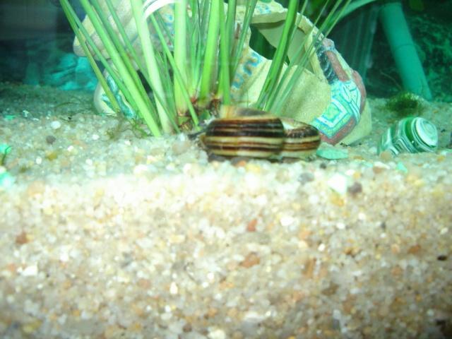 ponte escargots Imgp2211