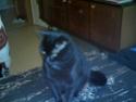 Mon chat a mal à l'oeil Imag0010