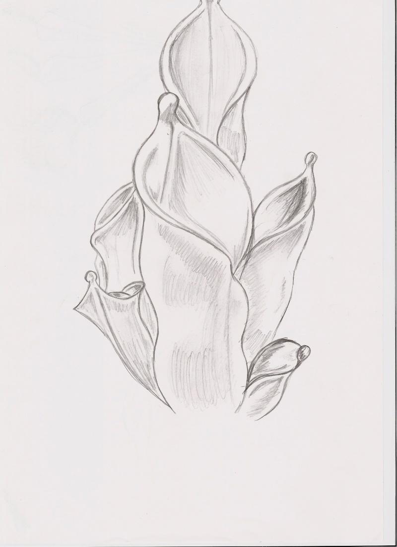 t3653 dessin de plantes carnivores