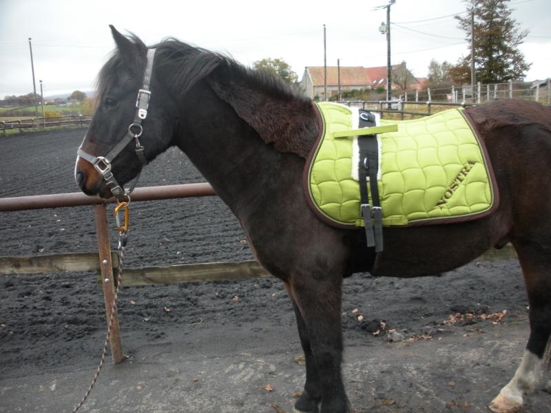 Couleur de tapis pour vos bai 1 forum cheval Tapis cheval vert pomme