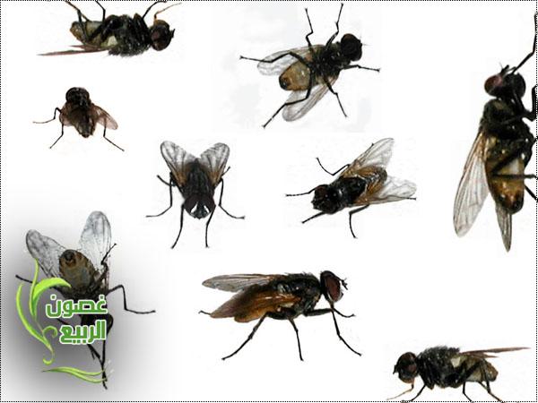 اكثر من طريقه للتخلص من الحشرات الطائره والزاحفه 1_uuoo10.jpg